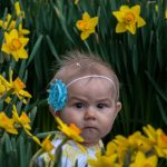 Hidden among the daffodils