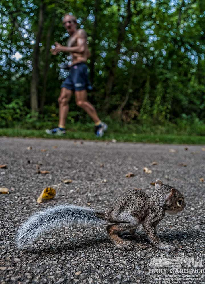Baby squirrel navigates its way across the bike path at Inniswood Metro Gardens.  My Final Photo for Aug. 20, 2013.