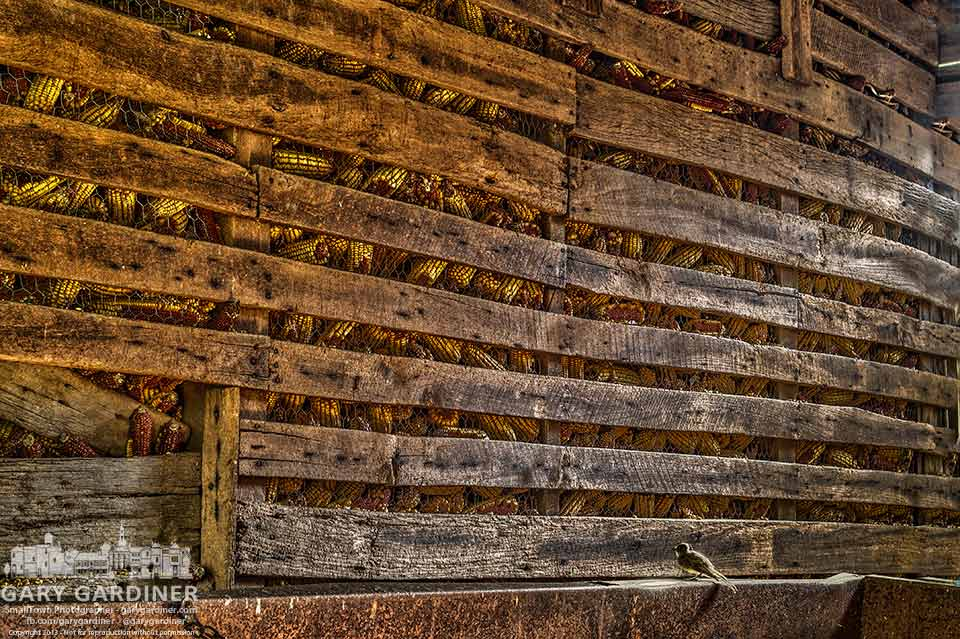 A lone sparrow surveys the possibilities in the corn crib of a farm in Westerville. My Final Photo for Sept. F, 2013.