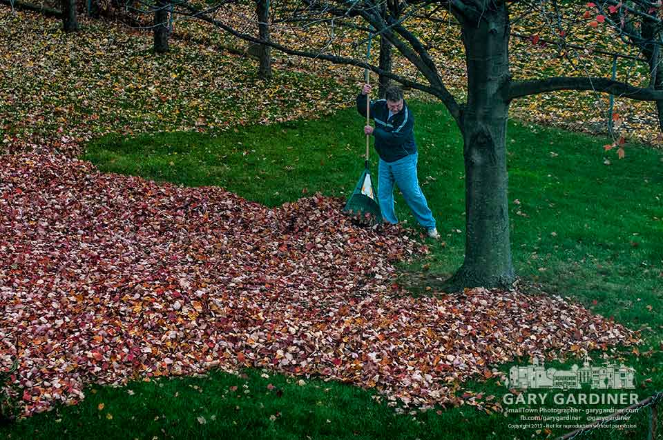 Neighbor rakes maple leaves into piles for removal from his back yard before the fist snow of the season arrives. My Final Photo for Nov. 11, 2013.