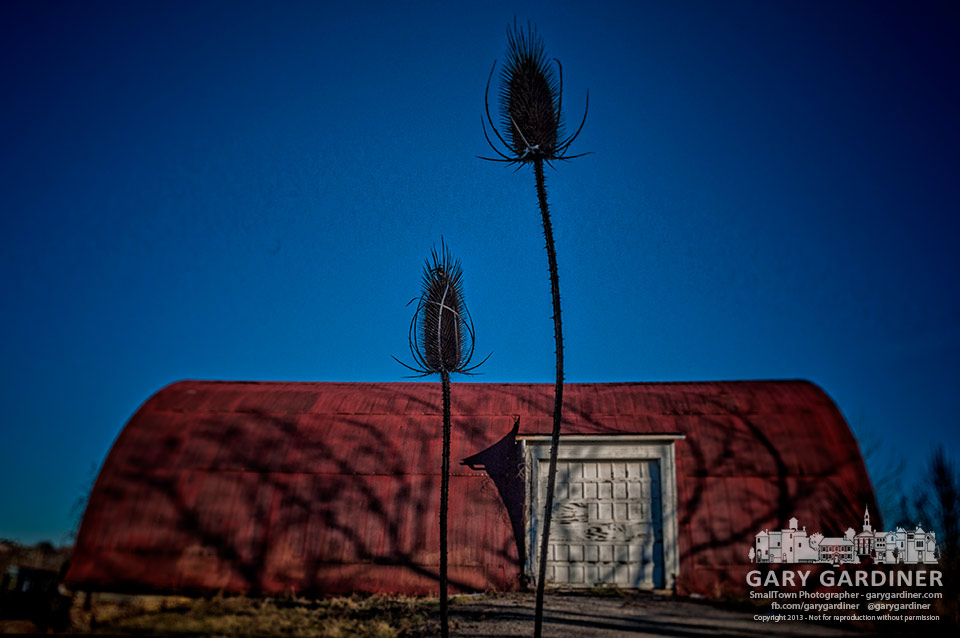 A pair of thistles are all that remain standing in front of the Braun farm barn after winter storms take their toll on dead vegetation. My final Photo for Dec. 26, 2013.