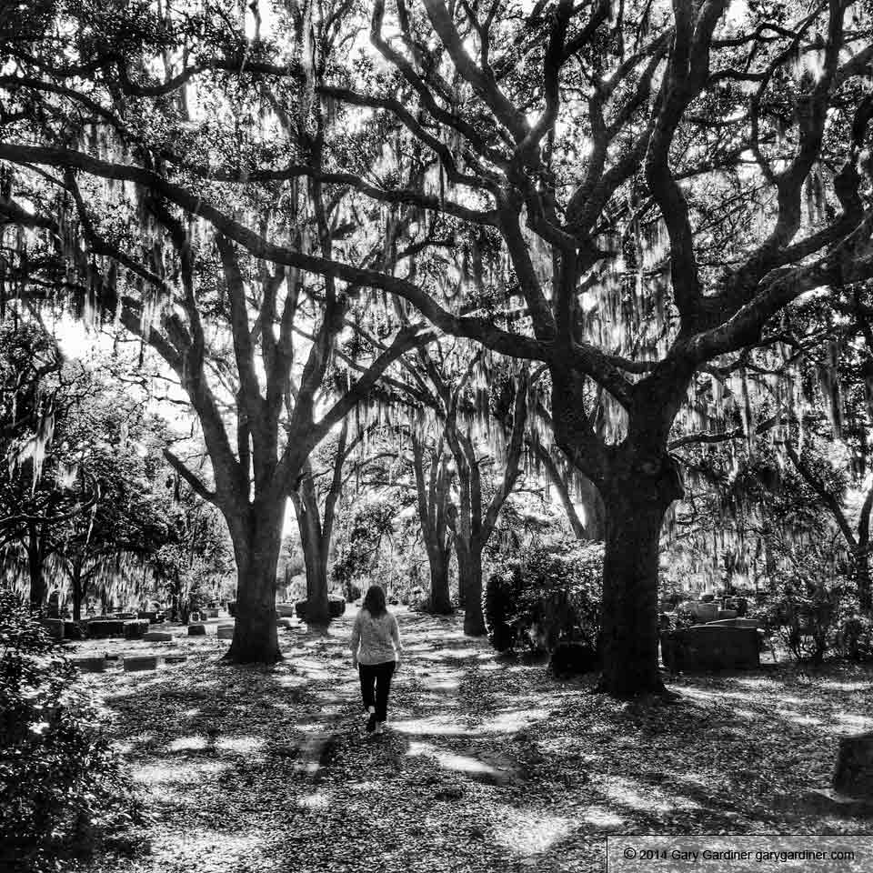 live-oak-trees-spanish-moss-iphoneography-20140527-1