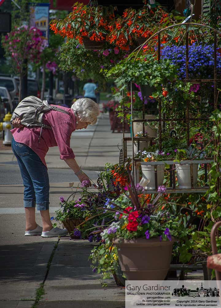 A woman carefully selects a hanging basket from the choices displayed in front of Talbot's Flowers on State Street in Uptown Westerville. My final Photo for May 29, 2014.