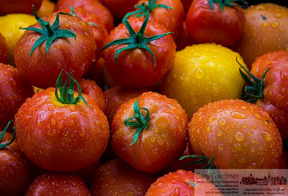 Fresh tomatoes covered with raindrops from an shower that greeted early shoppers sit ready for sale at the Uptown Westerville Farmers Market. My Final Photo for July 30, 3014.