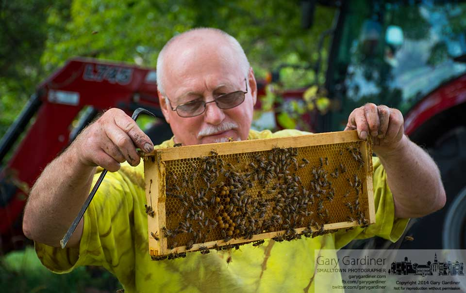 Beekeeper Mel Storm inspects one of his hives on the Braun farm property. My Final Photo for August 25, 2016.