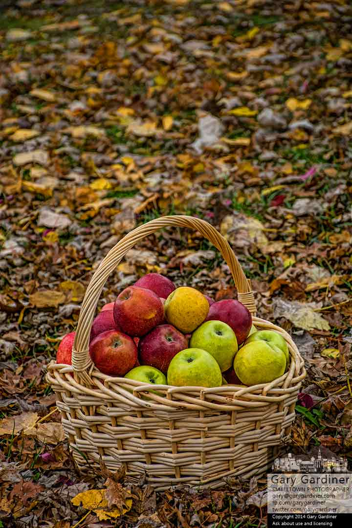 A basket of fresh-picked apples sit on fall leaves on a median at the Uptown Westerville Farmers Market. My Final Photo for Oct. 22, 2014.