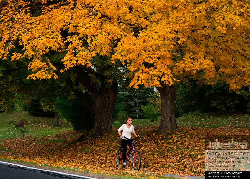 A young bicyclist travels along the sidewalk on Hempstead Road beneath a golden leafed maple tree. My Final Photo for Oct. 12, 2014.