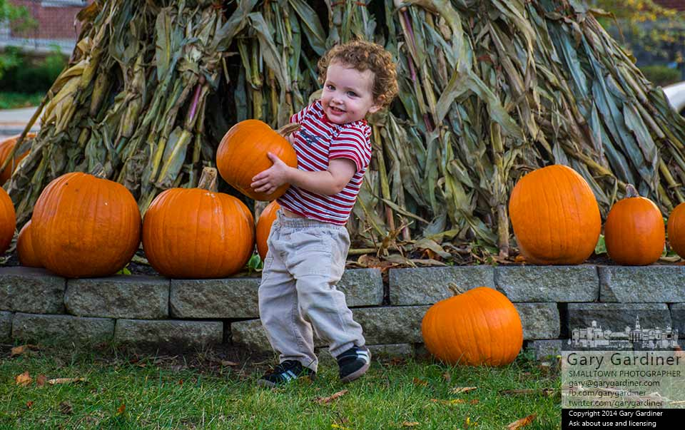 Two-year-old Shamis carries a pumpkin chosen from the collection  at the Troop 560 pumpkin sale on the lawn at the Masonic Temple in Westerville. My Final Photo for Oct. 15, 2014.