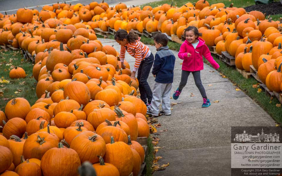 Three children share their delight in searching for their perfect pumpkin at the Boy Scout sales lot at the Masonic temple. My Final Photo for Oct. 4, 2014.