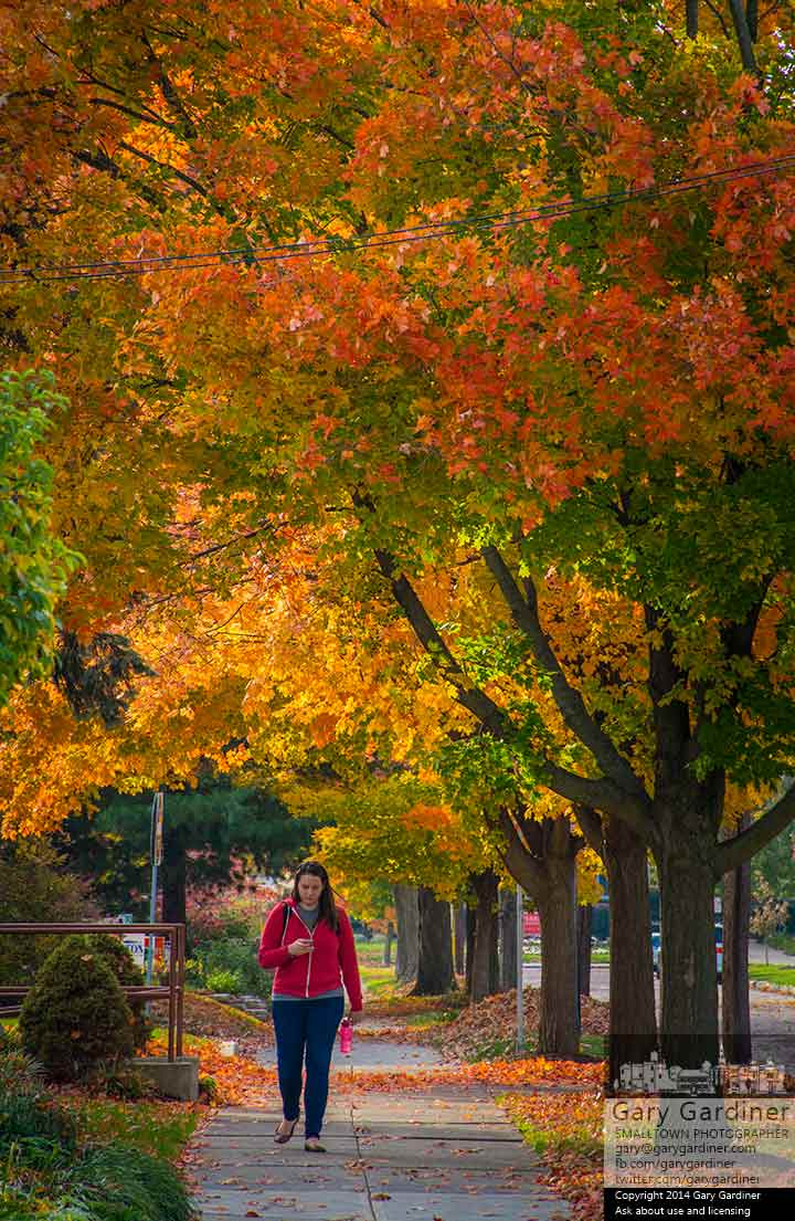 A woman checks her phone as she walks beneath the colorful canopy of red and gold maple leaves along College Avenue in Uptown Westerville. My Final Photo for Oct. 27, 2014.
