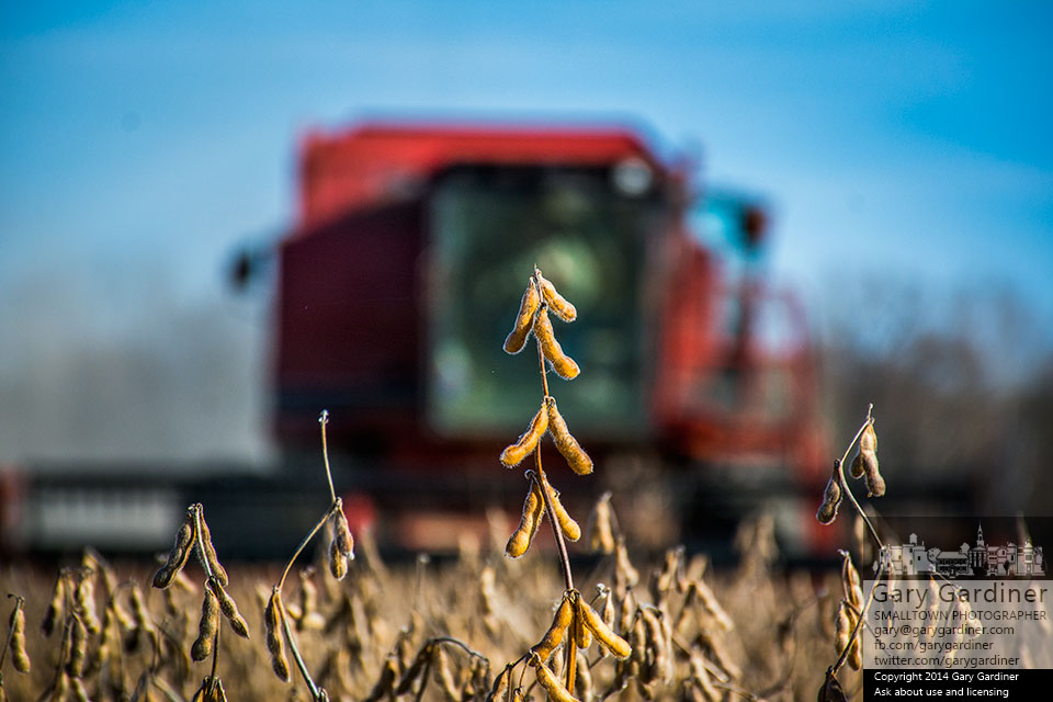 The combine approaches the final row of soybeans for the 2014 harvest at the Braun Farm in Westerville. My Final Photo for Nov. 10, 2014.