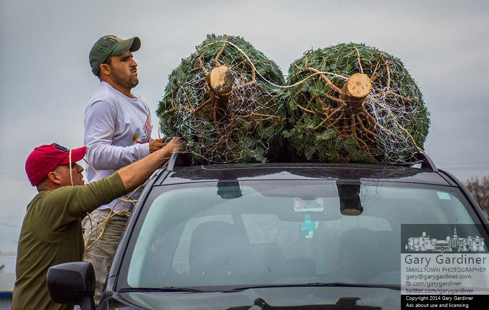 A Christmas tree shopper gets help tying his two selections onto the roof of his car. My Final Photo for Nov. 30, 2014.