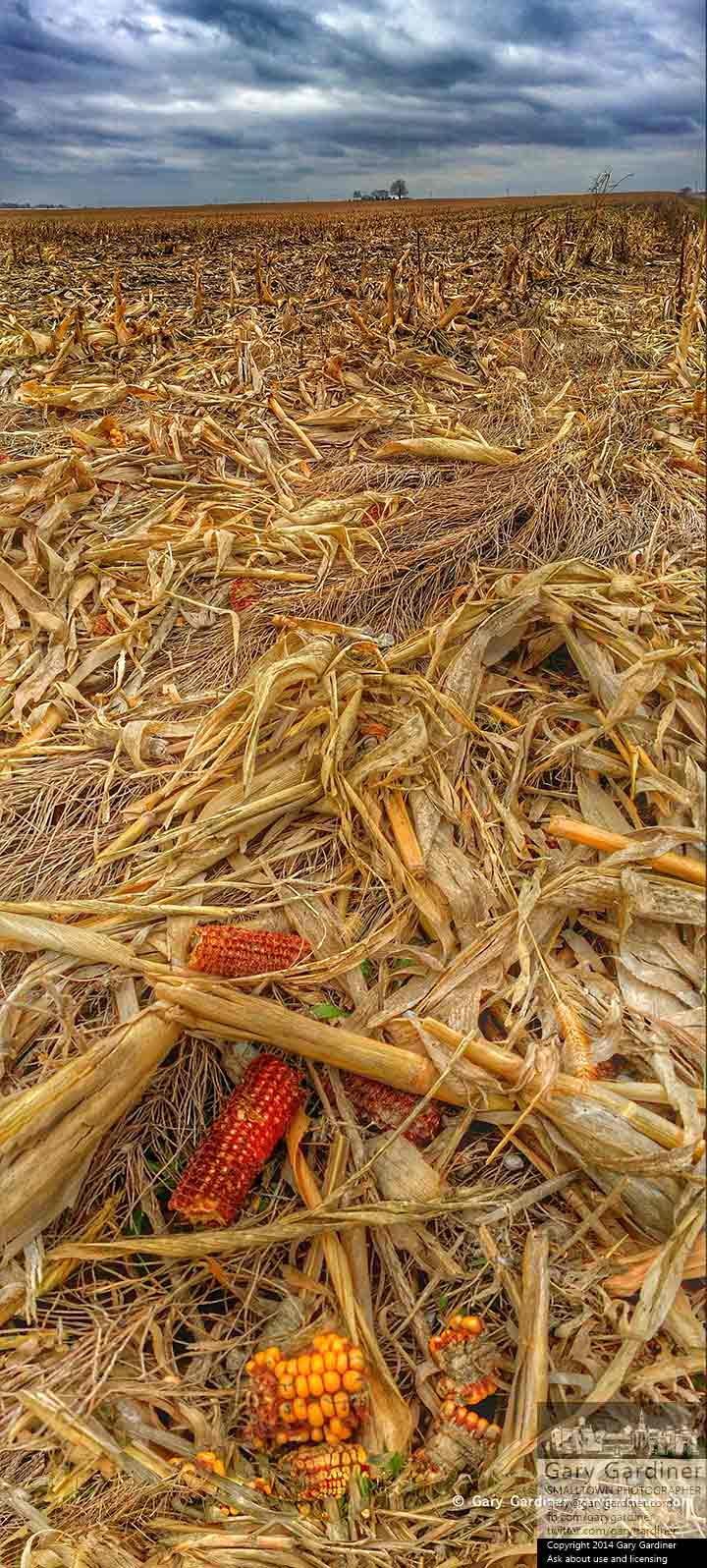 Corn stubble lies in a wet field near a house on farm near Croton, Ohio, on Thanksgiving. My Final Photo for Nov. 27, 2014.