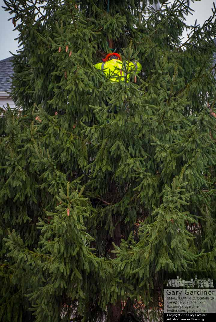 A city worker attaches support cables to the tree installed at city hall for the annual tree lighting ceremony on Friday. My Final Photo Dec. 1, 2014.