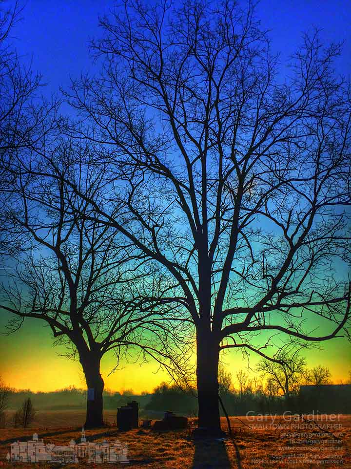 The morning sun rises behind two of the walnut trees on the Braun Farm along Cleveland Ave. in Westerville. My final Photo for Jan. 19, 2015.