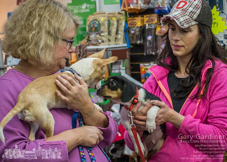 A pair of pooches check each other out during an adoption afternoon at Captivating Canines in uptown Westerville. My Final Photo for Jan. 24, 2015.