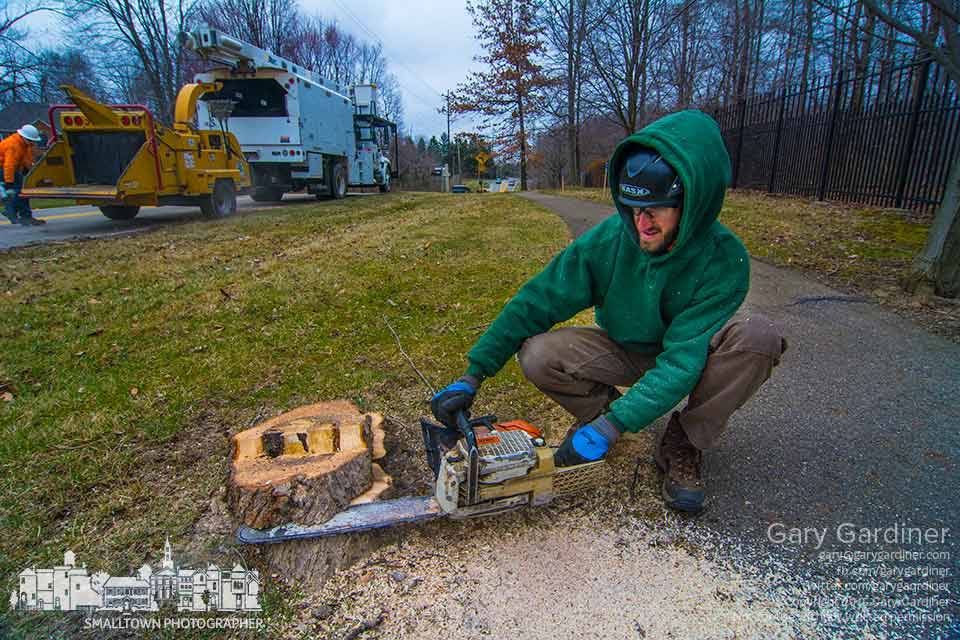 A city workers cuts the stump of a damaged and rotting tree along the Hempstead Road bike path in preparation for rebuilding the path. My Final Photo for March 27, 2015.