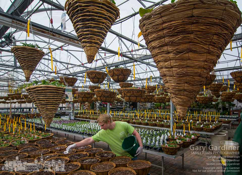 Matt  adds fertilizer to baskets yet to be planted with seedlings as Hoover Gardens prepares for flowering plant sales on the first day of spring. My Final Photo for March 20, 2015.