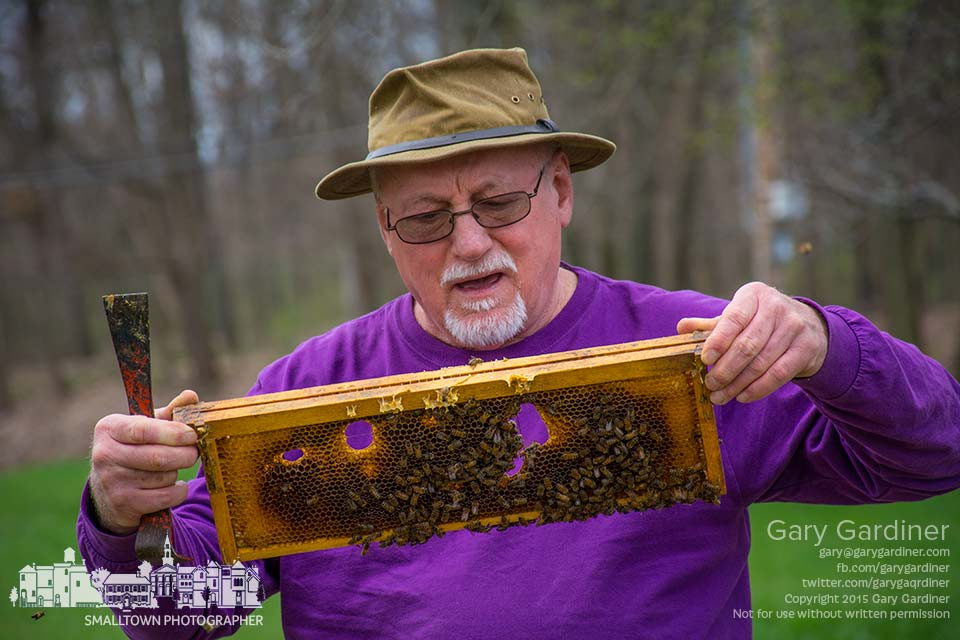 Beekeeper Mel Sword inspects a frame from one of his hives on the Braun Farm in Westerville. My Final Photo for April 13, 2015.