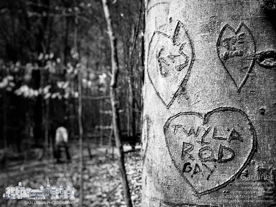 Betrothals of love and affections are carved into trees along one of the paths in Inniswood Metro Gardens. My Final Photo for April 12, 2015.