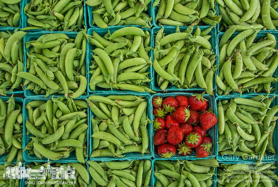 A single quart of strawberries sits in a collection of sugar snap peas at the Doran Farm booth at the Uptown Westerville Farmers Market. My Final Photo for June 17, 2015.