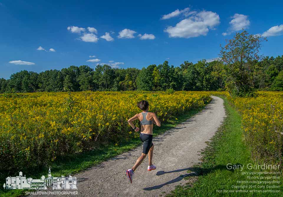 A runner navigates one of the paths through a filed of goldenrod at Sharon Woods park on the last day of summer. My Final Photo for Sept. 22, 2015.