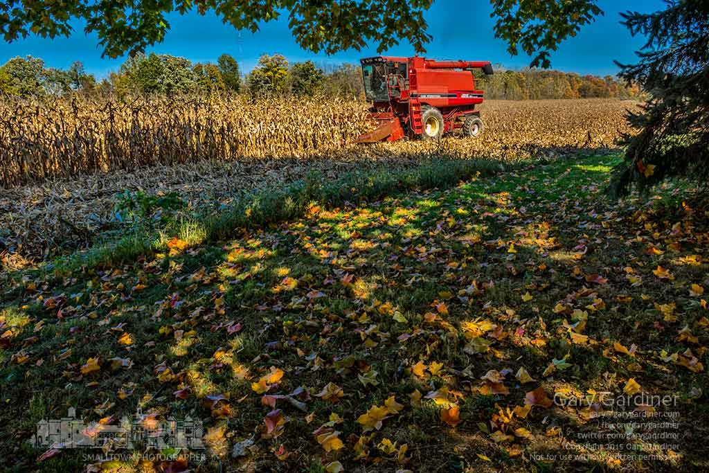 A combine runs through a field of corn on Africa Road as farmers take advantage of cool, dry weather to finish their harvest. My Final Photo for Oct. 15, 2015.