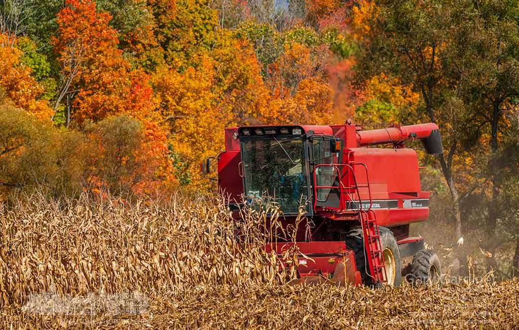 After repairing a broken hydraulic line on the combine Kevin Scott begins a second day harvesting corn on Africa Road. My Final Photo for Oct. 16, 2015.