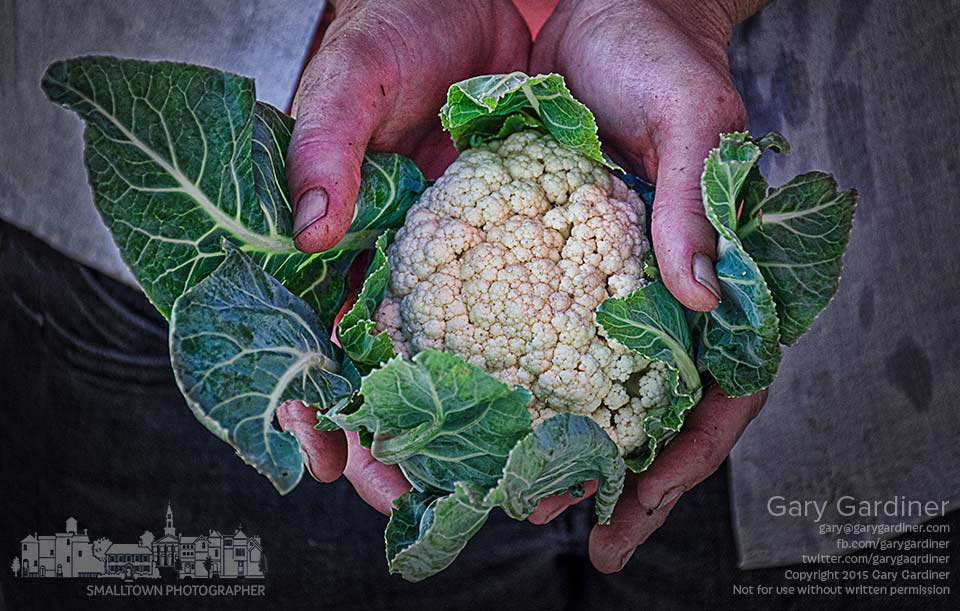 A vegetable farmer at the Uptown Westerville Farmers Market holds a small head of cabbage grown on her small rural farm. My Final Photo for Oct. 7, 2015.