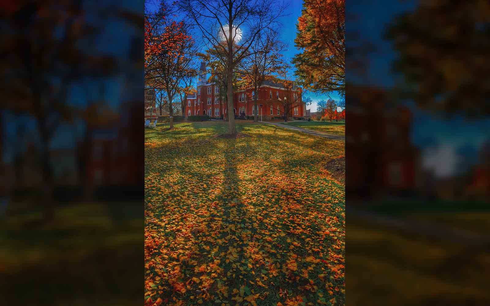 Afternoon sun brightens leaves fallen on the lawn at Towers Hall on the Otterbein University campus. My Final Photo for Nov. 13, 2015.