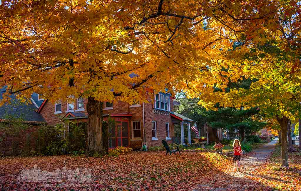 Layla walks beneath a golden canopy of maple leaves as she walks after school on West College Avenue in Westerville. My Final Photo for Nov. 2, 2015.