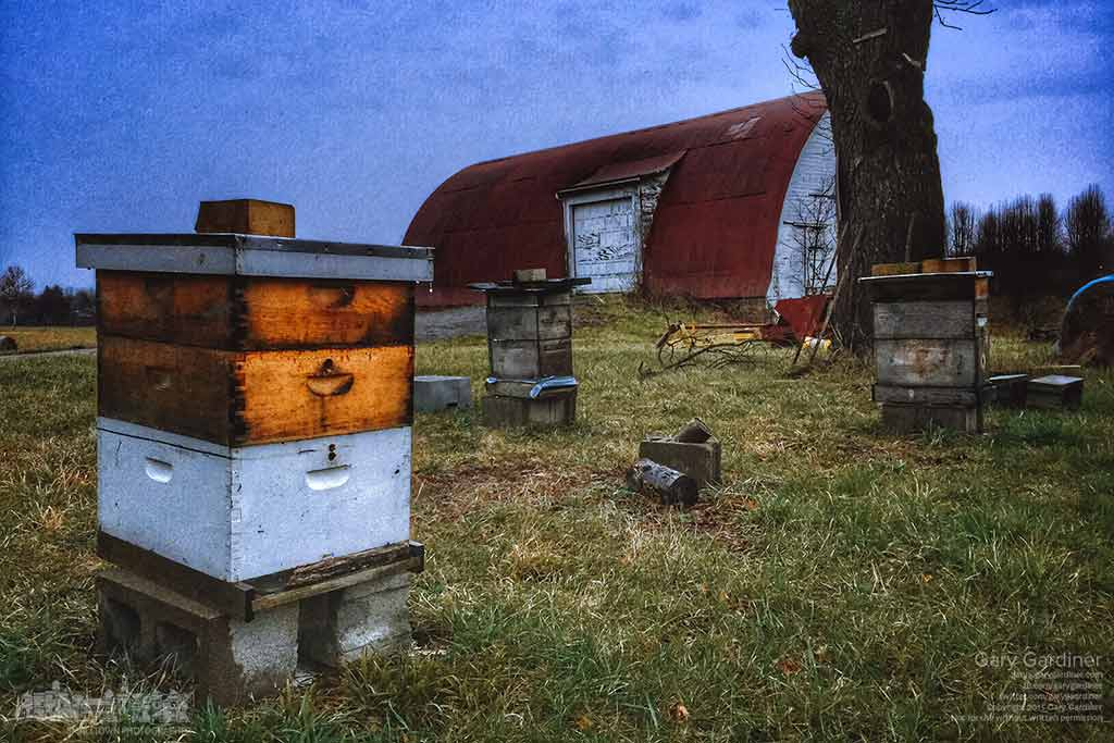 There's little obvious activity with the three bee hives at the Braun Farm on a rainy but unusually warm in mid-December. My Final Photo for Dec. 22, 2015.