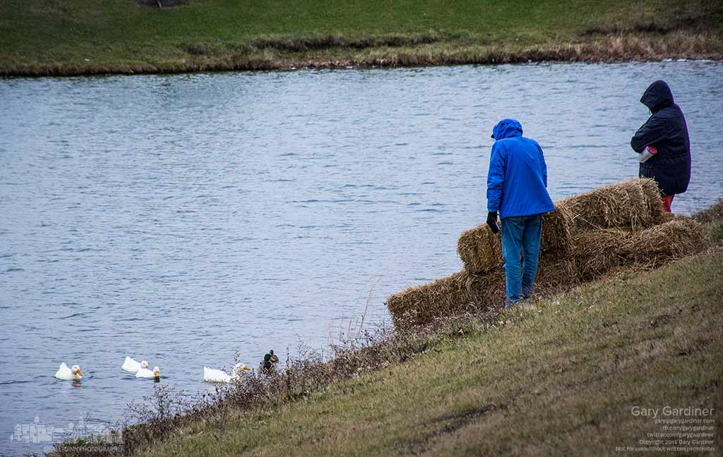 A couple watch over a quarter of domesticated white call ducks using a hay bale barrier shelter for their food at the pond at Hoff Woods Park, My Final Photo for Dec. 17, 2015.