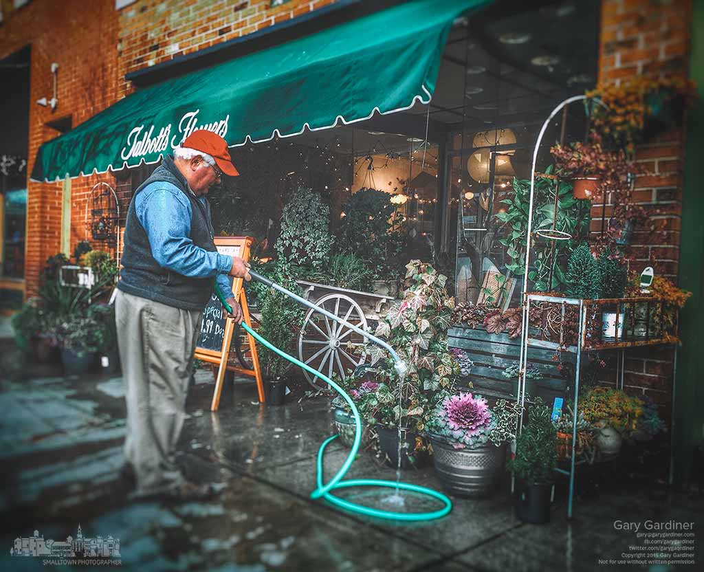 Dave Talbott waters the remaining summer flowers and plants in front of his Uptown Westerville florist shop more than a week into December when they are usually removed due to cold weather. My Final Photo for Dec. 8, 2015.