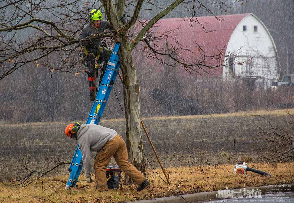 Working as snow begins city workers start to trim a London plane trees along Cooper Road. My Final Photo for February 8, 2016.