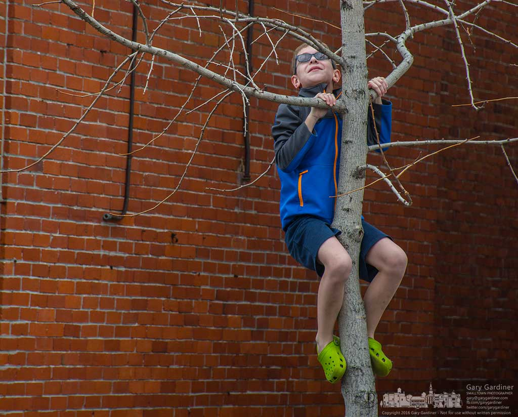 Nine-year-old Owen Kernodle climbs a ginkgo biloba tree in front of the alley in the first bock of State street in uptown Westerville while waiting for his mother to complete a short shopping trip. My Final Photo for March 12, 2016.
