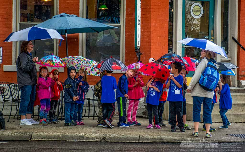 A preschool class carries their umbrellas as they follow teachers on a morning walk in the rain in Uptown Westerville. My Final Photo for April 22, 2016.