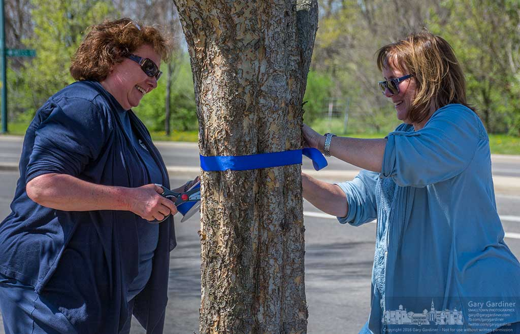 Two of about 30 volunteers tie blue ribbons on trees and pole along the route where police cars will lead a procession carrying the body of Columbus SWAT officer Steven Smith who was killed in the line of duty to St. Paul Catholic Church for services. My Final Photo for April 17, 2016.
