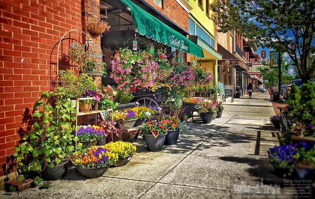 Afternoon sun breaks through clouds to frighten baskets and pots of flowers edging the sidewalk in front of Talbott's Flowers in Uptown Westerville. My Final Photo for May 5, 2016.