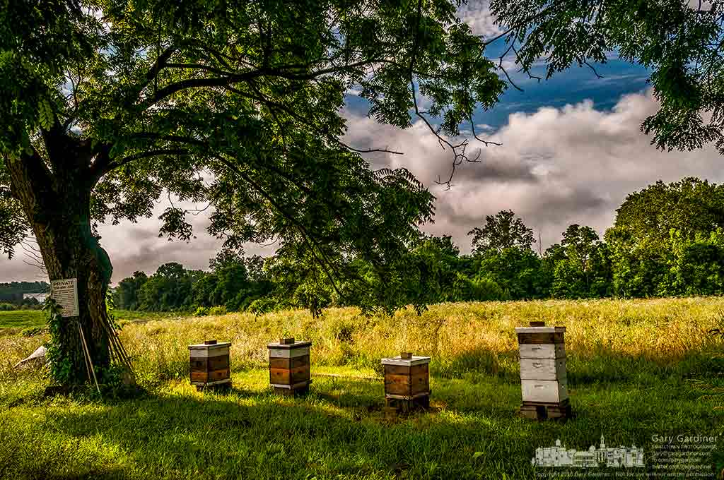The morning sun begins to warm the four bee hives beneath the walnut tree at the Braun Farm on Cleveland Ave. in Westerville, Ohio. My Final Photo for June 27, 2016.