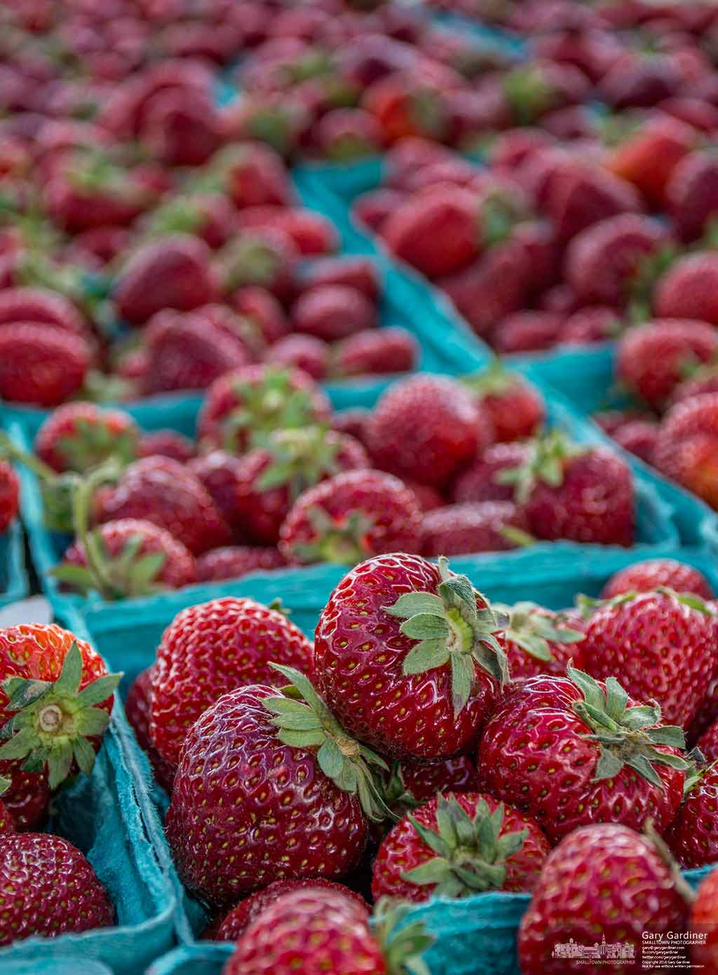 Fresh strawberries fill a table at the Doran's Farm spot in the Uptown Westerville farmers market as an abundance of early season fruits and vegetable begin to arrive at the weekly market. My Final Photo for June 1, 2016.