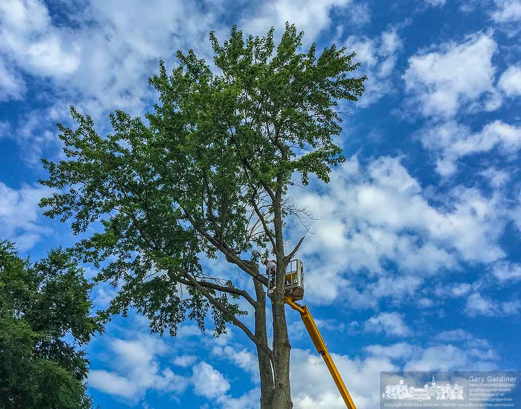 A tree trimmer is only half way done removing a silver maple from the grounds of the First Presbyterian church on east College Ave. in Uptown Westerville, Ohio. My Final Photo for June 24, 2016.