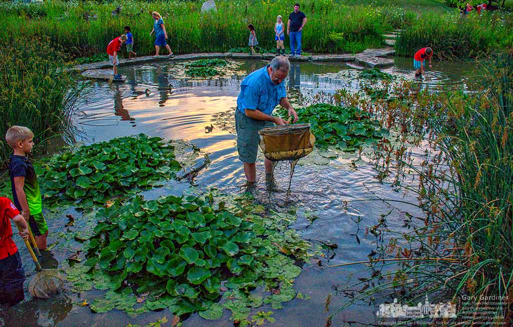 MAD Scientist Mark Dilley scoops up samples from the wetlands during Frog Friday at Highlands Park in Westerville, Ohio. My Final Photo for July 29, 2016.