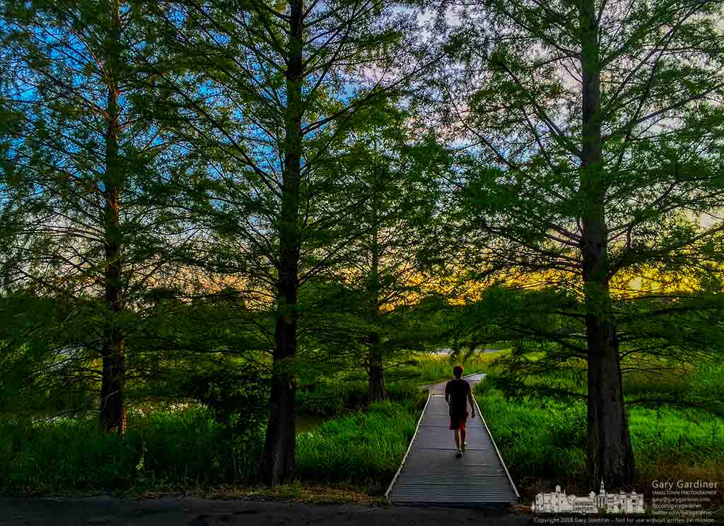 The late sun lights the western sky behind cypress trees along the walkway through the wetlands at Highlands Park. My Final Photo for July 7, 2016.