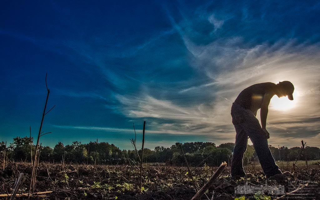 Kevin Mash searches for arrowheads in the glares of the setting sun on the recently tilled fields at the Braun farm on Cooper Road in Westerville, Ohio. My Final Photo for Sept. 22, 2016.