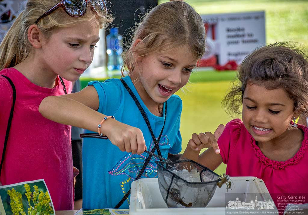 A trio of young girls cautiously investigate crawfish on display as part of the Westerville Parks and Recreation 50th Anniversary celebration at Alum Creek Park North. My Final Photo for Sept. 15, 2016.