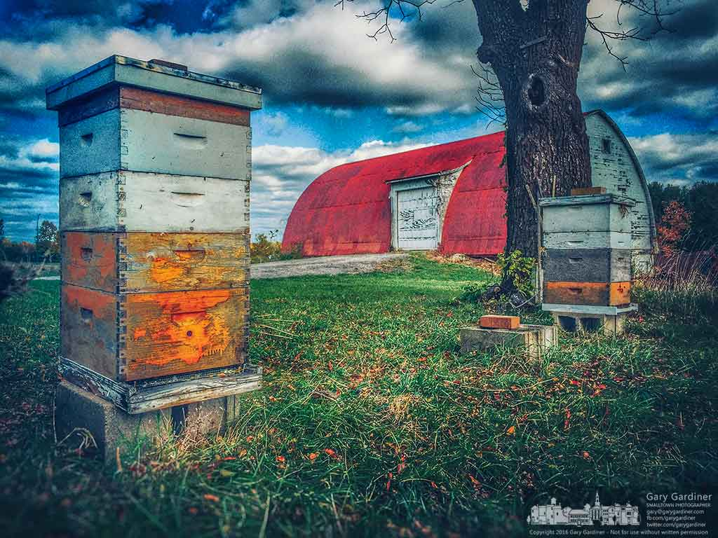 Cool weather and fewer flowers limit activity in the two remaining hives on the Braun Farm. My Final Photo for Oct. 24, 2016.