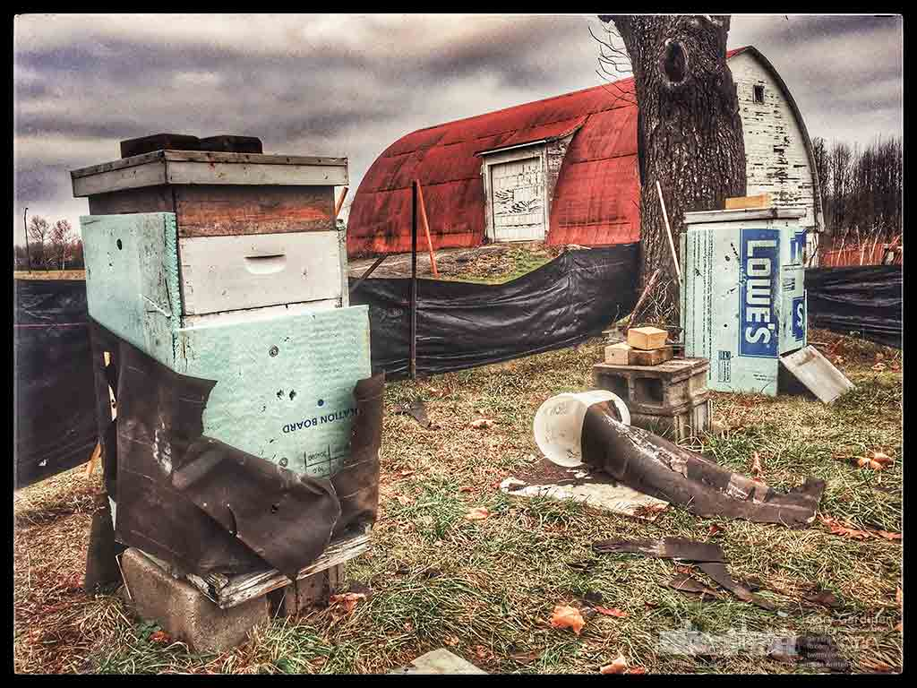 The remaining bee hives at the Braun Farm are wrapped for winter but have suffered from strong winds and an undetermined set of creatures ripping away the protective shields. My Final Photo for Dec. 12, 2016.