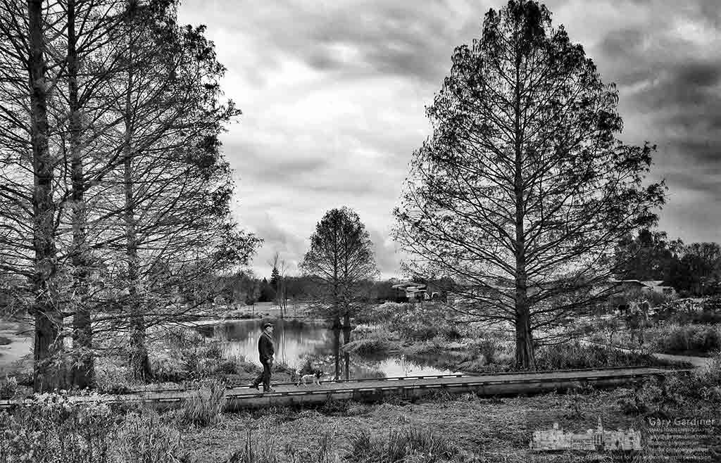 A man walks his dog across the bridge spanning the narrows of the Highlands wetlands where the dark of winter signaled the nearby cypress trees to shed their leaves. My Final Photo for Nov. 30, 2016.