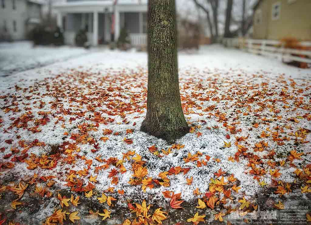 Sweetgum tree leaves litter the snow covering the front yard of a Vine Street home in Uptown Westerville. My Final Photo for Dec. 17, 2016.